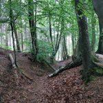 Een leuk paadje door het bos