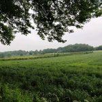 Net uit het bos zagen wij dit groot grasveld