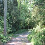 En ineens weer een mooi paadje midden in het bos