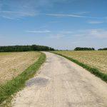 Een landweg, boerenvelden en een bos in de verte