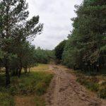 Zo langs de rand van de heide was dit bospaadje ook erg mooi.