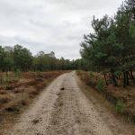 Een geweldige mooie natuur in Nederland met hele fraaie bospaden.