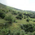 Ook hier in Spanje is er genoeg groene natuur.
