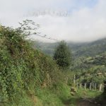 Een heel fraai pad met ook nog een stukje uitzicht op de bergen.