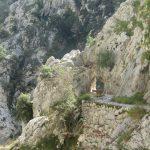 Ook de berggeiten vonden de paden leuk.