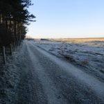 Een fraai winters tafereel op de scheiding tussen bos en duinen