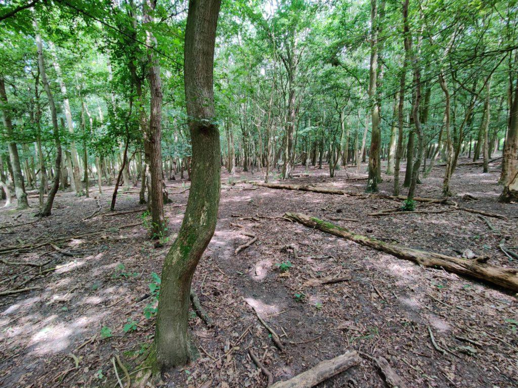 Een fraai stukje bos