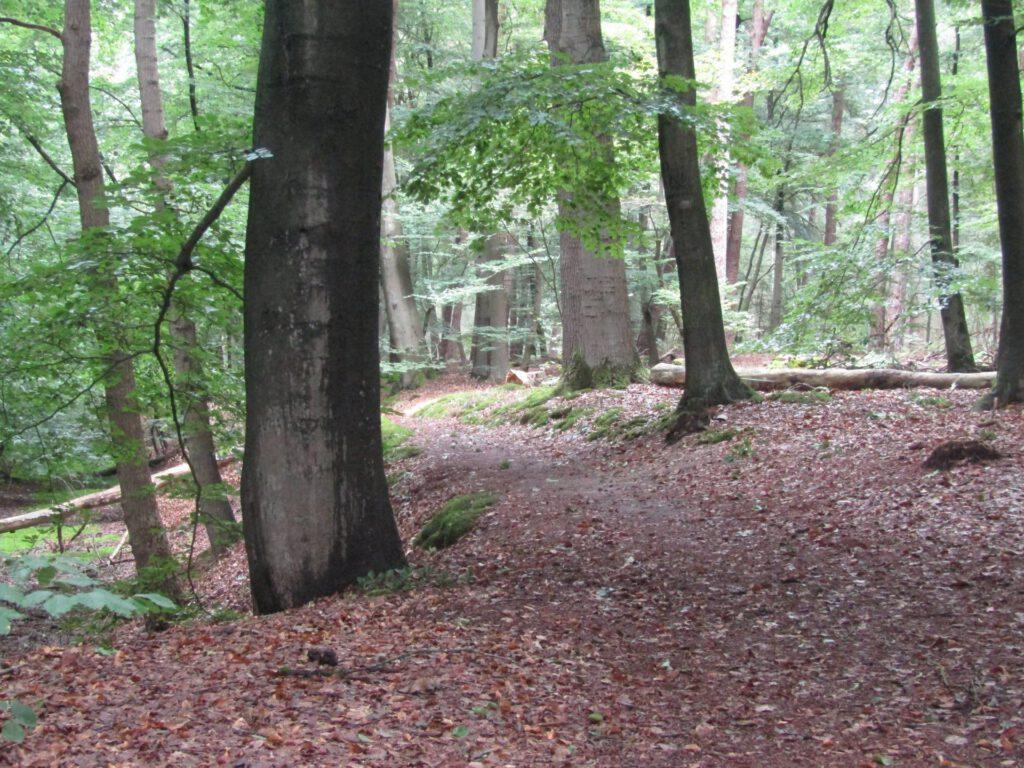 Dit leuke paadje liep door een fraai stuk bos