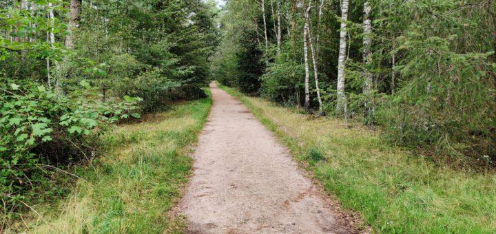 Deze mooie weg leidde ons door een mooi bos