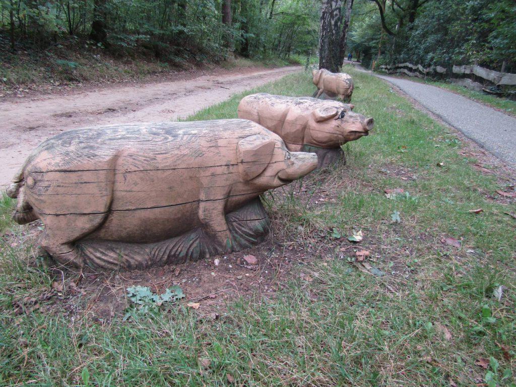Vlak bij Holten kwamen wij deze varkens tegen