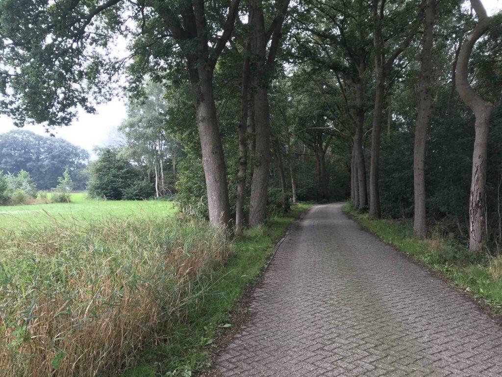 Een weg fraai omzoomd door mooie bomen