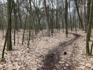 Een mooi pad (2)