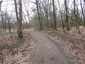 Een mooi pad (3)