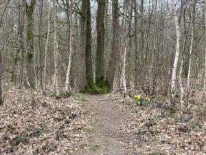 Een stukje bos