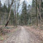 Een leuke bosweg (1)